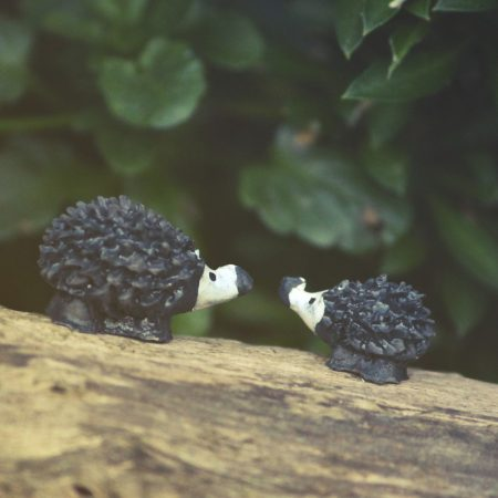 miniature hedgehogs