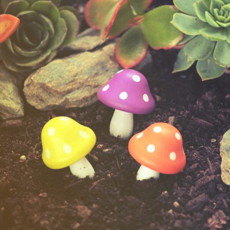 technicolour toadstools